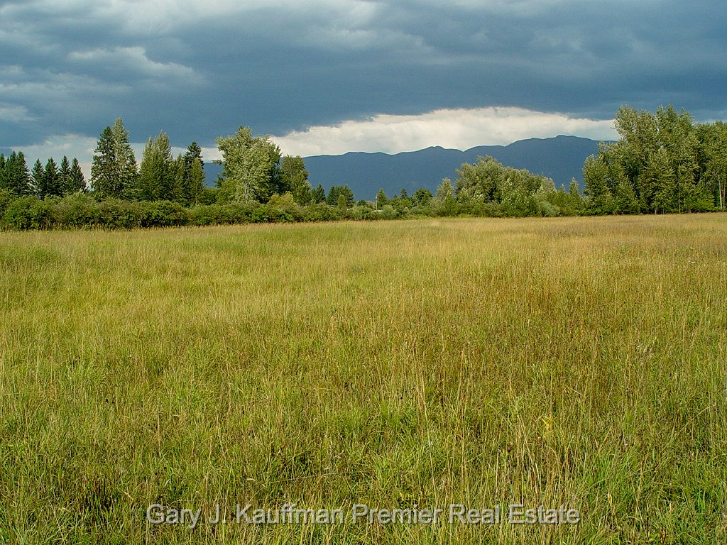 Flathead River Evergreen> <img style=
